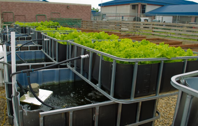 J and j aquafarms aquaponic consulting little house on for Fish garden system