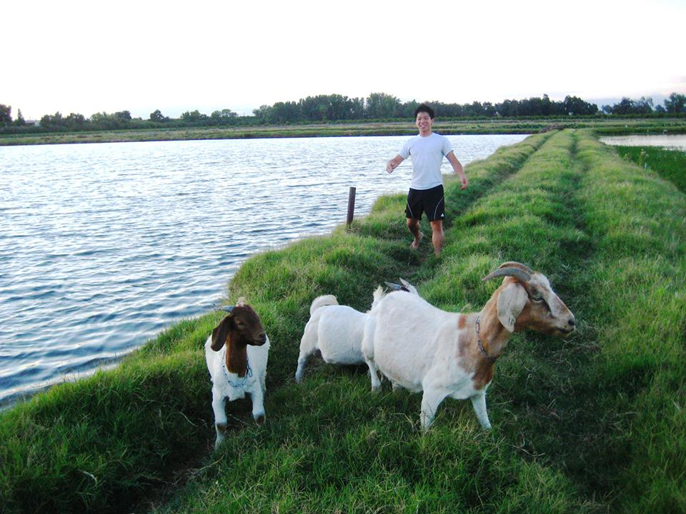 Jeremy herding our goats